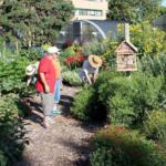 Nebraska Extension Master Gardeners in the Backyard Farmer garden on the University of Nebraska–Lincoln's East Campus. (Courtesy of University of Nebraska-Lincoln)