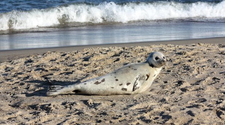 Diagnosing cause of deaths of marine mammals