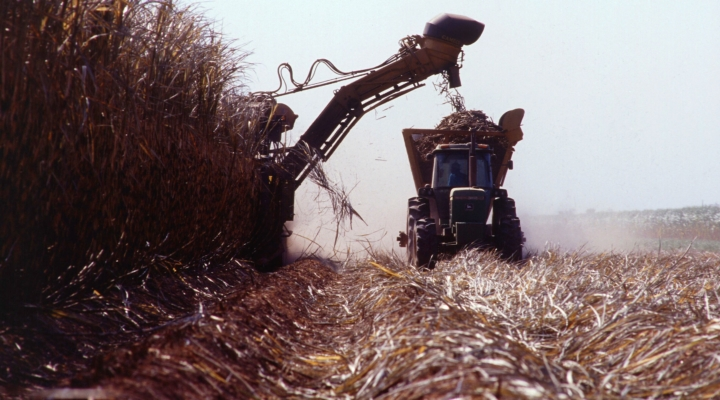Technology increases yields in sugarcane
