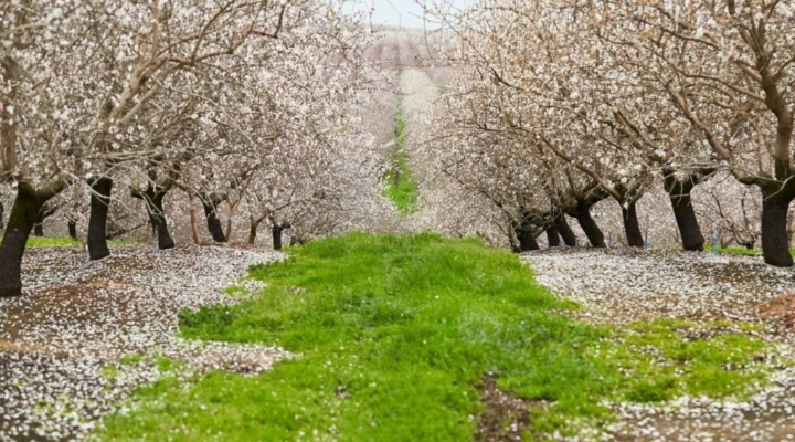 Almond Board of Calif. invests $6.8M into research