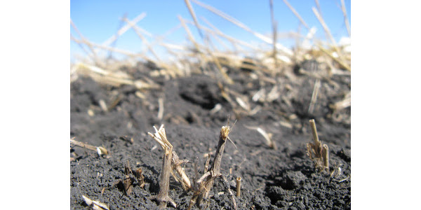 Fall fertilizer application outlook
