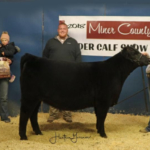 Chloe Hazel, Beresford received Overall Reserve Champion Breeding Heifer during the Miner County 37th Annual Feeder Calf Show held November 23, 2018 at the 4-H Grounds in Howard. (Courtesy image)