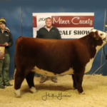 Keaton Grant Krieg received Champion Hereford Breeding Heifer and Third Place Overall Breeding Heifer during the Miner County 37th Annual Feeder Calf Show held November 23, 2018 at the 4-H Grounds in Howard. (Courtesy image)