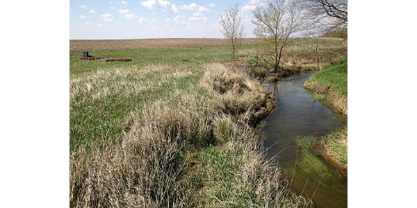 A saturated riparian buffer, with the control structure in the background, filtering drainage from fields before it reaches a tributary of the South Skunk River. (Photo by Dan Jaynes)
