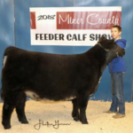 Cody Eich, Howard received Champion Exotic Heifer during the Miner County 37th Annual Feeder Calf Show held November 23, 2018 at the 4-H Grounds in Howard. (Courtesy image)