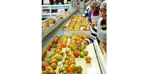 Very few records are required under the Food Safety Modernization Act Produce Safety Rule. However, work training records are important. (Photo by Michigan State University Extension)