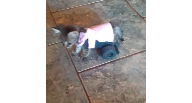 When 9-year-old sees a kitten who can't walk, he builds her a tiny wheelchair