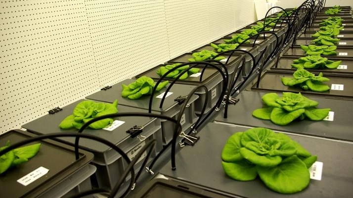 Eating your veggies, even in space