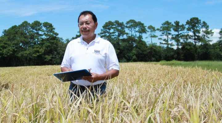 High-protein rice brings value, nutrition