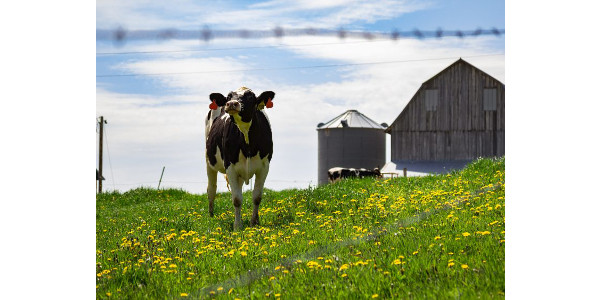 Wisconsin dairy review and outlook