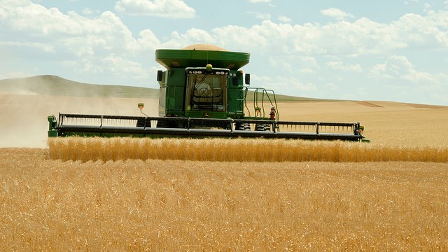 Canadian wheat exports to China soar