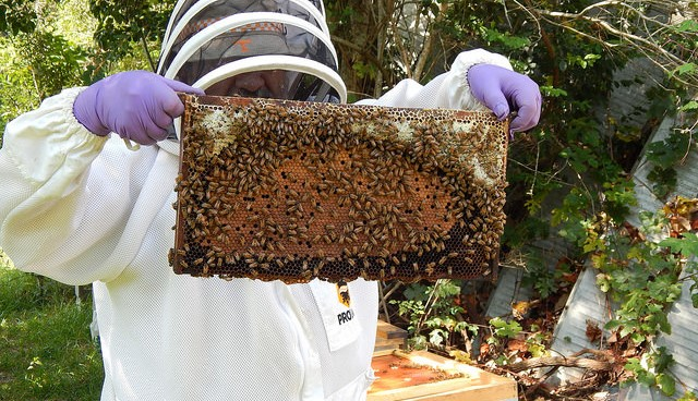 Interested in beekeeping? Two schools planned