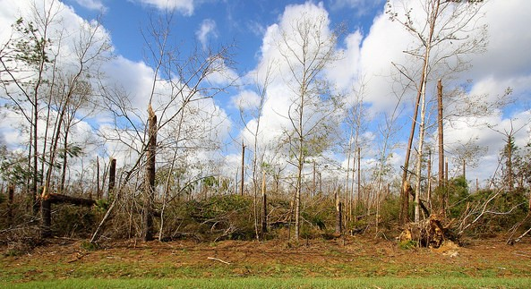 Timber industry will take years to recover