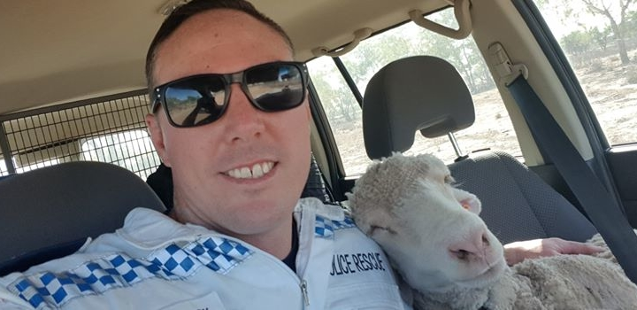Kind cop helps adorable sheep out of the heat
