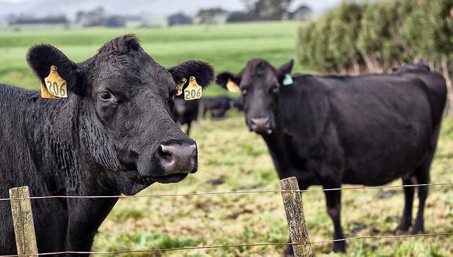 Deadline nearing for Beef Leaders Institute