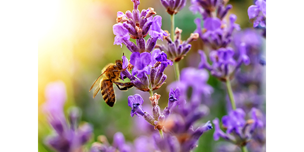Declining populations of bees, birds, butterflies, bats and insects led MU Extension to develop a curriculum to help the public learn about pollinators and how to increase their presence. (Courtesy of University of Missouri Extension)