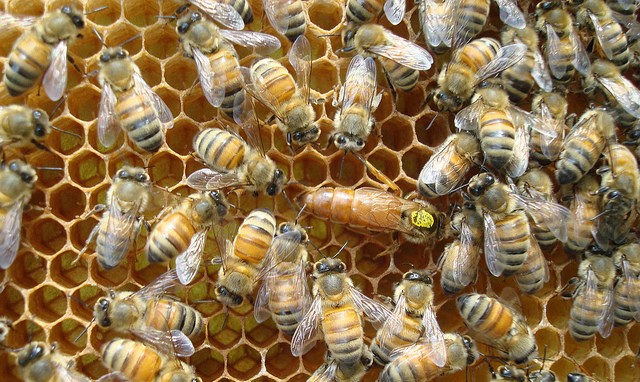 USDA's National Honey Board appointments