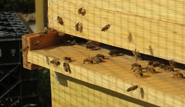 Beekeepers Discussion Group, Feb. 11th