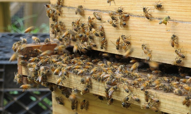 LEAF Workshop Series kicks off with beekeeping