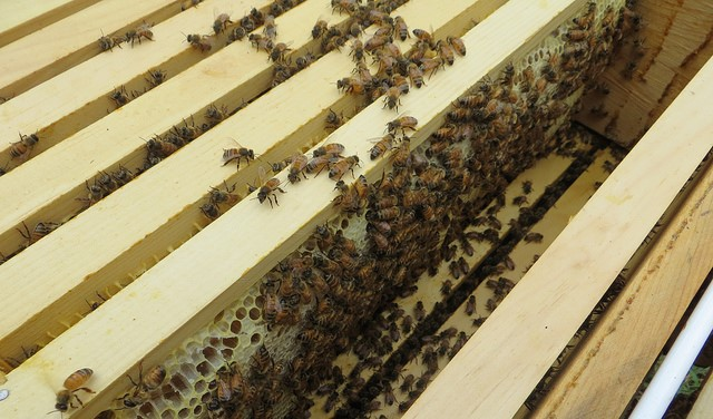 Beginner beekeeping with UMaine Extension
