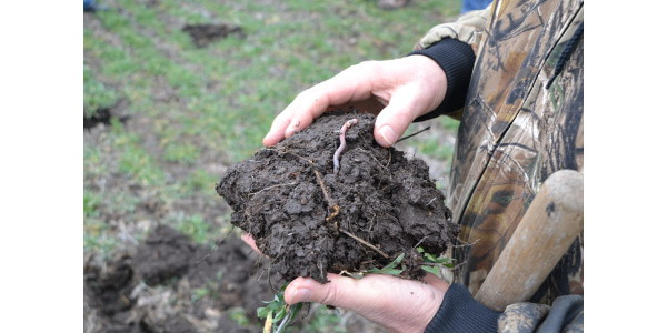 Learn about cover crop cost-share options