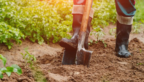 Dig into soil health at Feb. 14 workshop