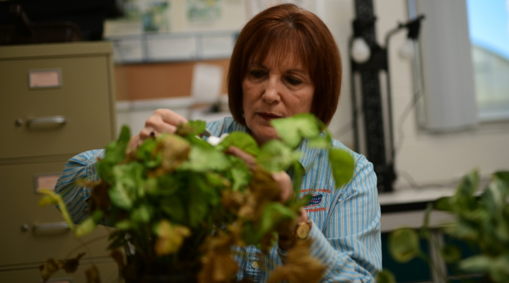 UF 'plant whisperer' helping Floridians
