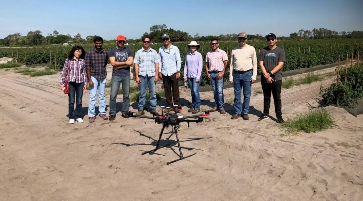 Drone helps detect avocado pathogen