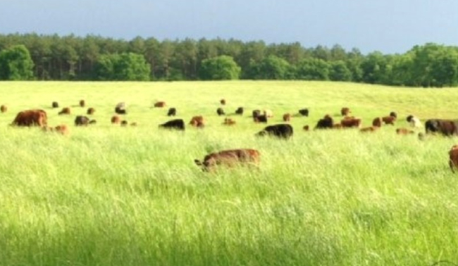 Spring Pasture Forage Management Seminar