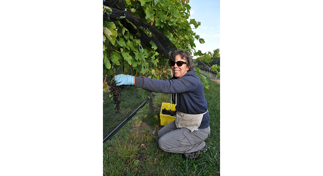 Viticulture innovator earns Excellence in IPM Award