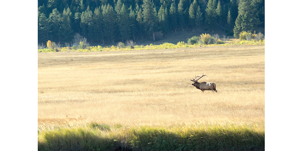 CPW conducts extensive research as part of its mission. (Courtesy of Colorado Park & Wildlife)