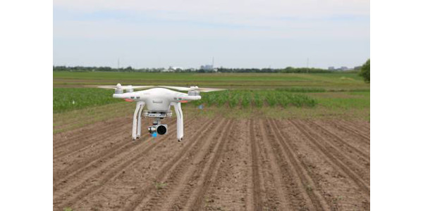 Michigan State University Extension is currently exploring drone-based remote sensing tools for nitrogen management. (Courtesy of Michigan State University Extension)