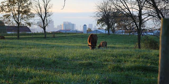 Eastern Ohio winter grazing workshop