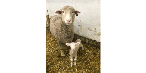 Lambing workshop Feb. 12