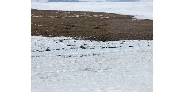 When manure is applied on the surface of frozen soils or on top of snow, we have two concerns. First, it cannot seep into the ground, so if there is any runoff in your fields, it can carry the manure to low spots or away from the field entirely which may cause environmental issues. The second problem we have to consider is the ammonia losses. (Courtesy of University of Minnesota Extension)