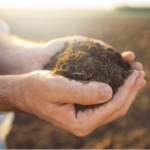 Making sound soil fertility management decisions is an important part of successful crop production, on both an economic and environmental level. (Courtesy of ISU Extension and Outreach)