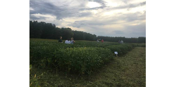 Early maturity soybean variety trial