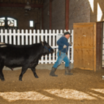 Seedstock breeders and commercial cow-calf producers interested in purchasing a total-performance-tested bull will want to attend the 2019 Illinois Performance Tested Bull Sale. (Courtesy of University of Illinois)