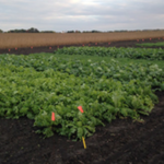 The Midwest Cover Crops Council (MCCC), in collaboration with University of Illinois Extension, will be holding its annual meeting in Springfield, Feb. 20-21. (Courtesy of University of Illinois)