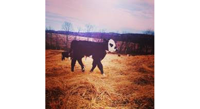 CCE offers roational grazing course for beginners
