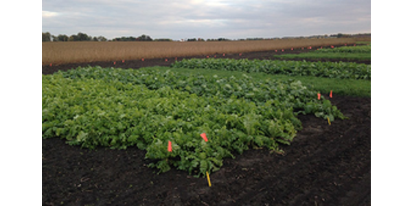 Midwest Cover Crops Council annual meeting