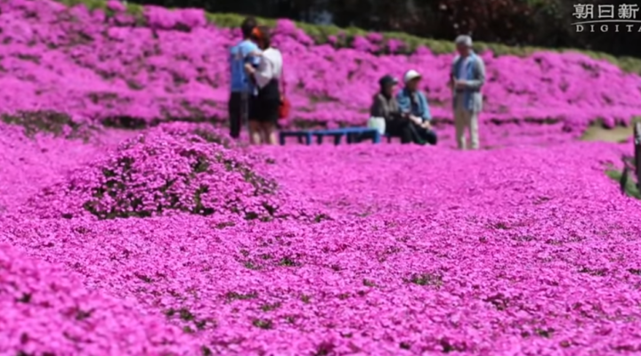 Man plants a field of flowers for his blind wife