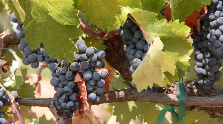 Innovation is key at upcoming wine industry event