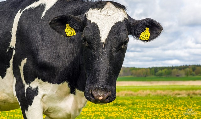Environmental mastitis prevention 101