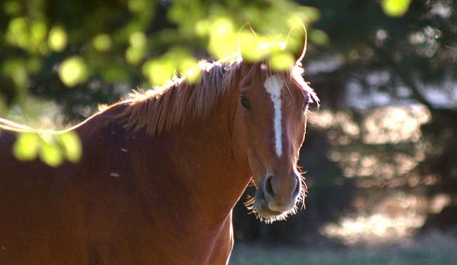 Equine diseases contained on Smith Co. premises