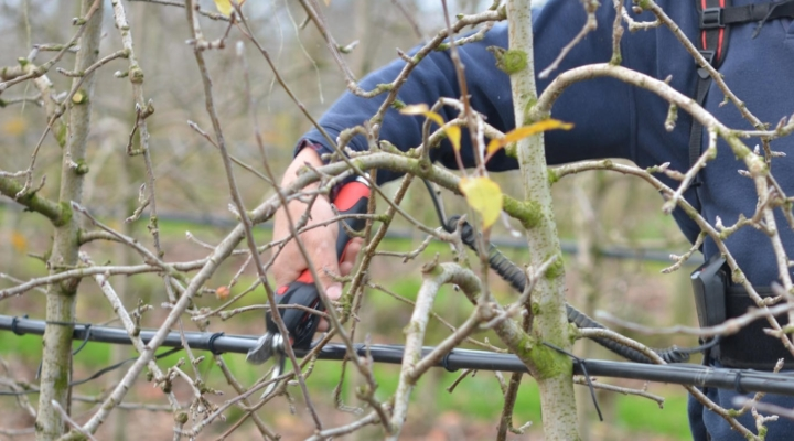Apple Tree Pruning Workshop, February 21st