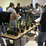 Crop Scout Training participants identify weeds during the 2018 Nebraska Extension course. The March 5 event is for pest managers, while a May 8 training course is for entry-level scouts. (Deloris Pittman/Eastern Nebraska Research and Extension Center)