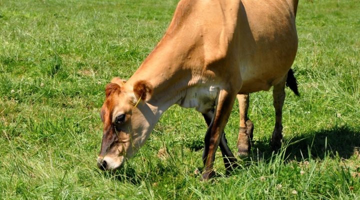 Vermont organic dairy producers conference