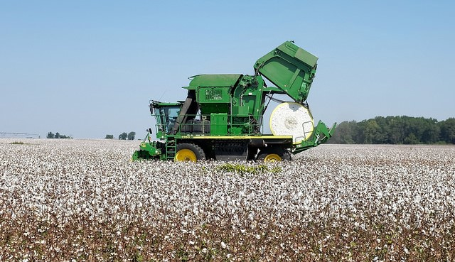 Uncertainty in the global cotton market