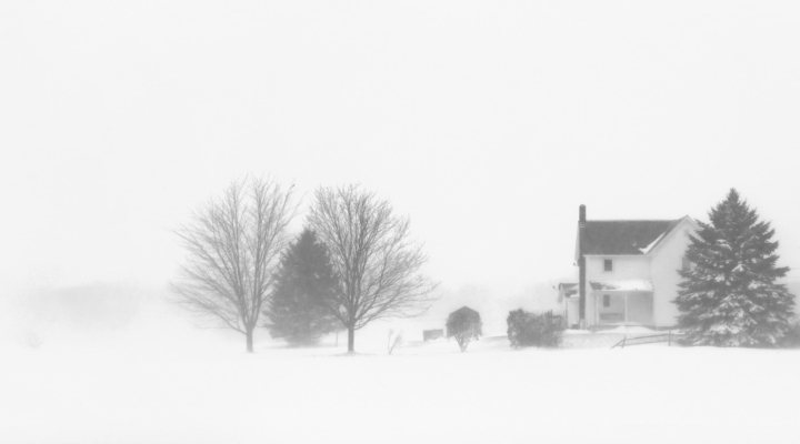 Dairy farms take $4M hit from cows lost in blizzard
